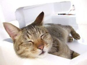 nappingcat