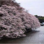 千鳥ヶ淵で桜見物 最寄り駅はJR中央線市ヶ谷駅から!他にも見所がたくさん!